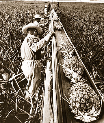 how a sugar plantation maximize self How sugar changed the world by heather whipps | june 2, 2008 05:26am et more sugar, or white africans on caribbean sugar plantations (and the islands themselves) outnumbered their european owners by a wide margin.
